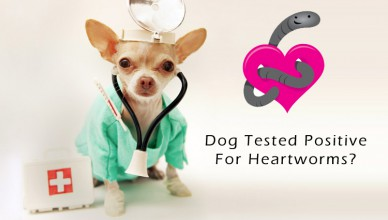 Dog Tested Positive For Heartworms