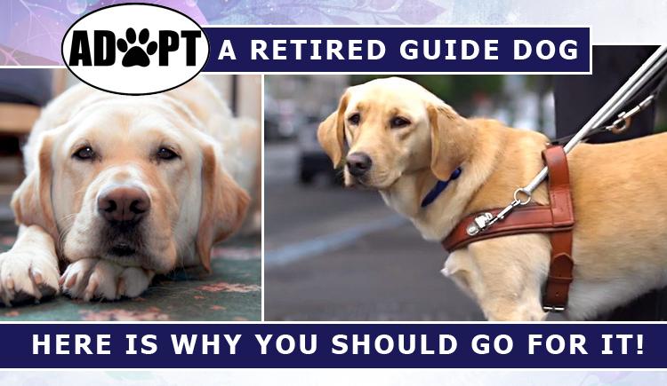 adopting retired dogs