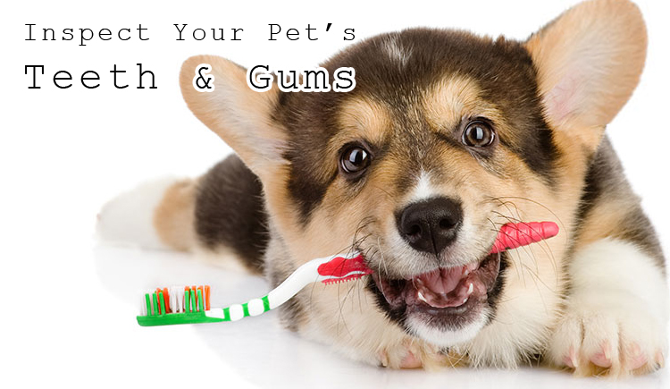 Pet's teeth care | dental care of Pets