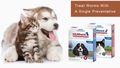 Treat Five Worms In Your Pets