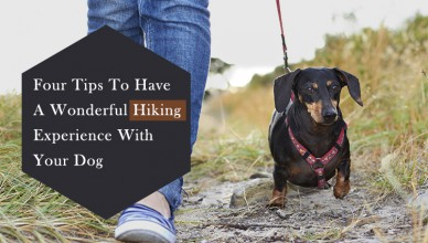 Tips To Enjoy The Great Outdoors With Your Dog