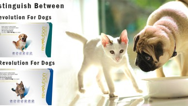 Distinguish Between Revolution For Cats and Dogs
