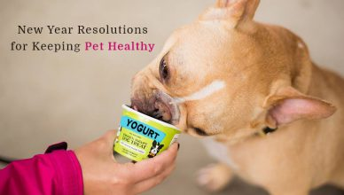 New Years Resolution for Pets