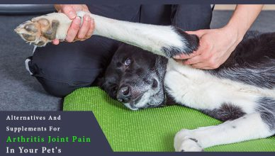Arthritis & Joint Pain supplements for dogs