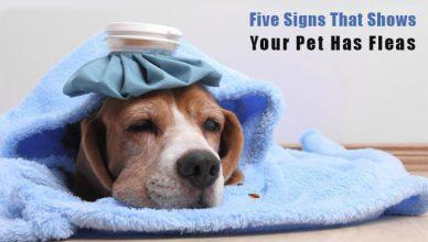 know pet has fleas