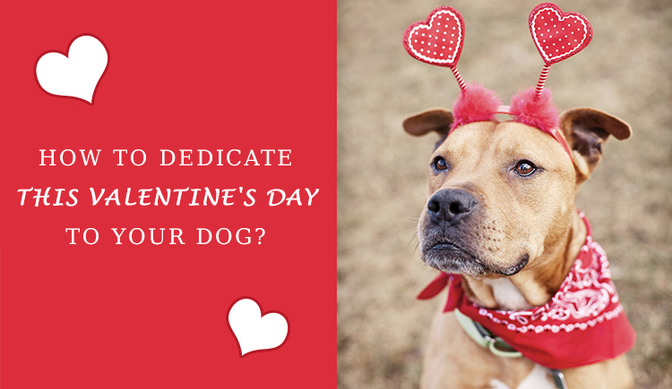 Dedicate This Valentine's Day To Your Dog