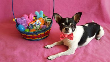 Celebrate Easter with Dog Goodies - Budget Pet World