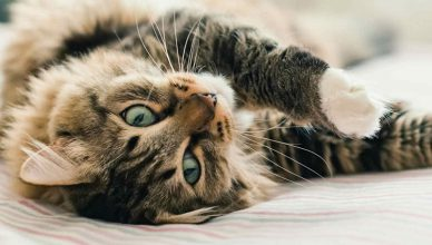 5 effective ways to manage separation anxiety in cats - Budget Pet World