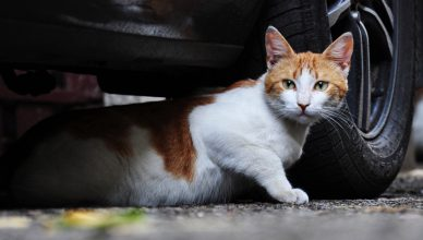 7 Possible Dangers That Linger Around For Outdoor Loving Cats - Budget Pet World Blog