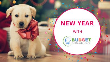 New year with your pet