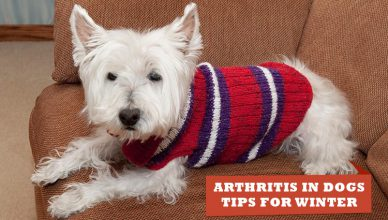 Arthritis-In-Dogs-Tips-For-Winter-and-Treatment
