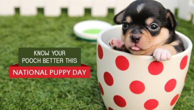 Know Your Dog Better This National Puppy Day