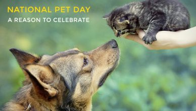 Reason to celebrate for National Pet Day