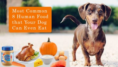 Most Common 8 Human Food that Your Dog Can Even Eat BudgetPetWorld