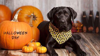 dog-for-halloween