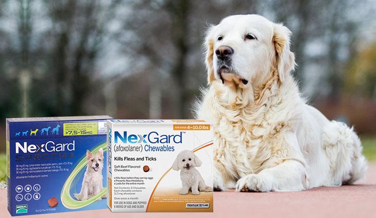 Difference-between-Nexgard-Spectra-and-Nexgard
