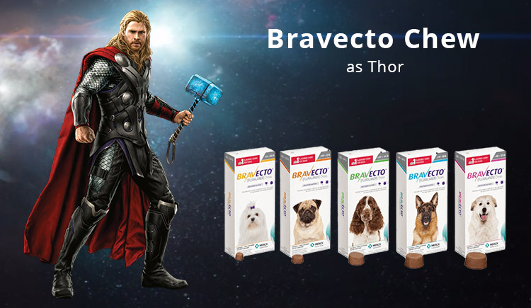 Buy Bravecto The Thor