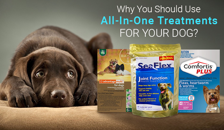 All in one treatment for your dog