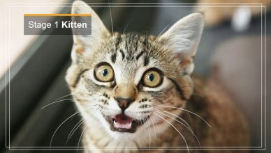 Stage 1 of Cat Kitten & Junior