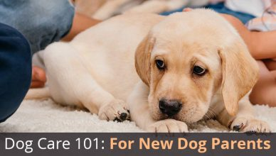 How to handle Your First Dog