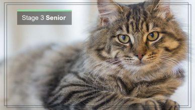 Stage 3 of Cat Senior & Geriatric