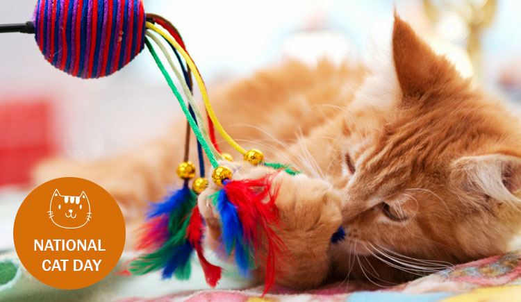 National Cat Day: How To Make It Special For Your Cat