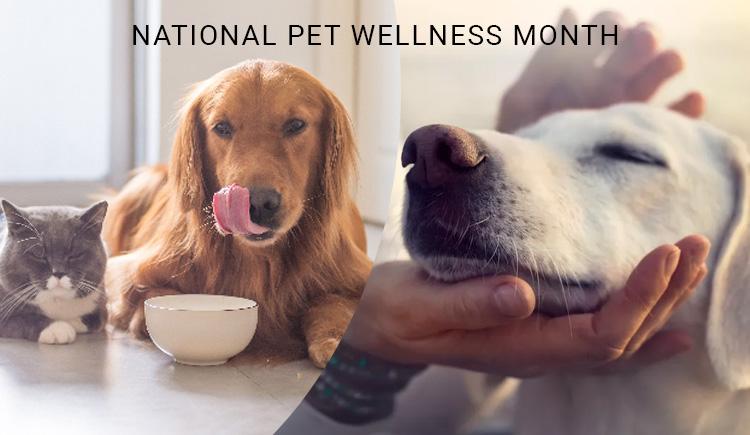 National Pet Wellness Month