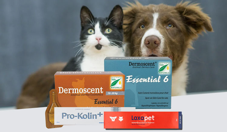 The Best Nutritional Supplements for Your Pets