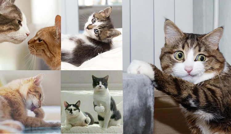 The Feline Five - Which Personality Does Your Cat Have?