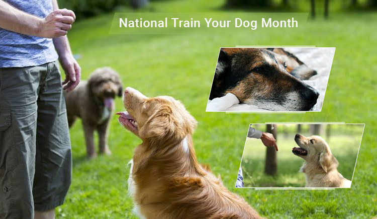 Train Your Dog to Be Obedient This National Train Your Dog Month