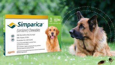 Simparica Oral Flea & Tick Preventive for Dogs
