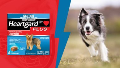 Heartgard for dog