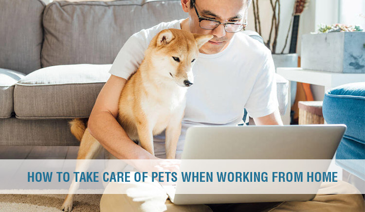 How to care pets when Working from home