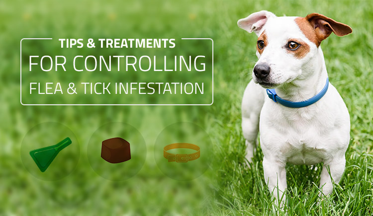 Tips and Treatments for Controlling Flea and Tick Infestation
