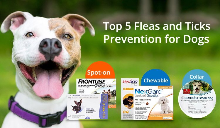 Top 5 Fleas and Ticks Prevention for Dogs